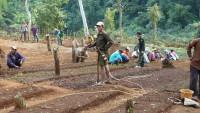Ban Panor Arbeit im Blumenfeld